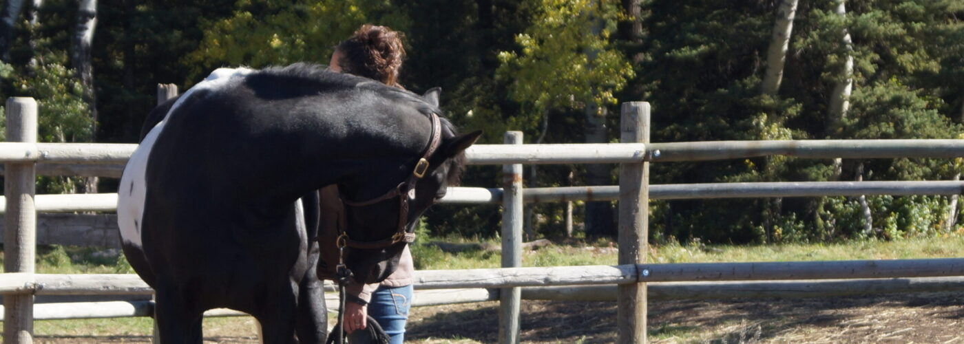 Cimarron Way~Equine Assisted Learning